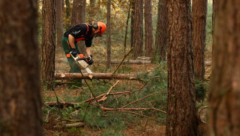Waldarbeier entastet liegenden Baum